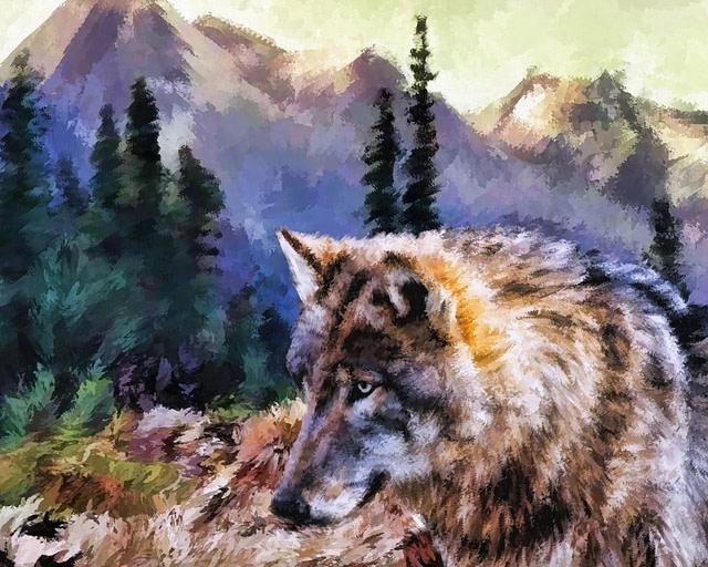 Essere un lupo solitario